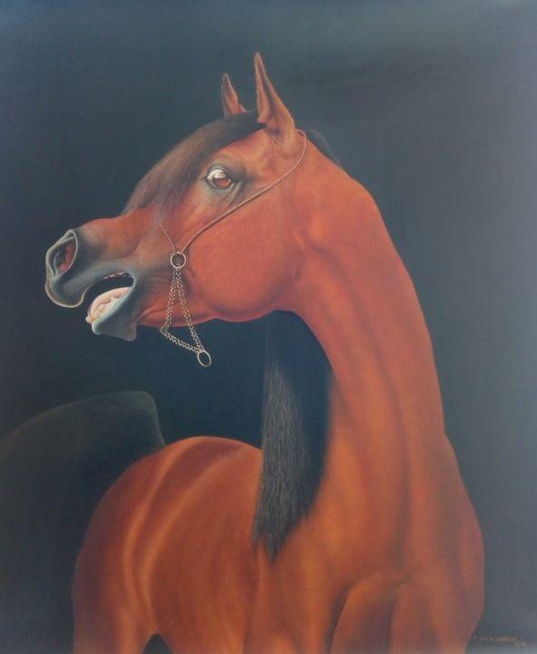 Arabian Stallion - African Oils Online