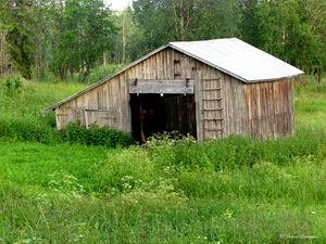Old shed - Viveca Lammers