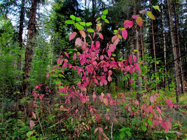 Red shrubs - Viveca Lammers