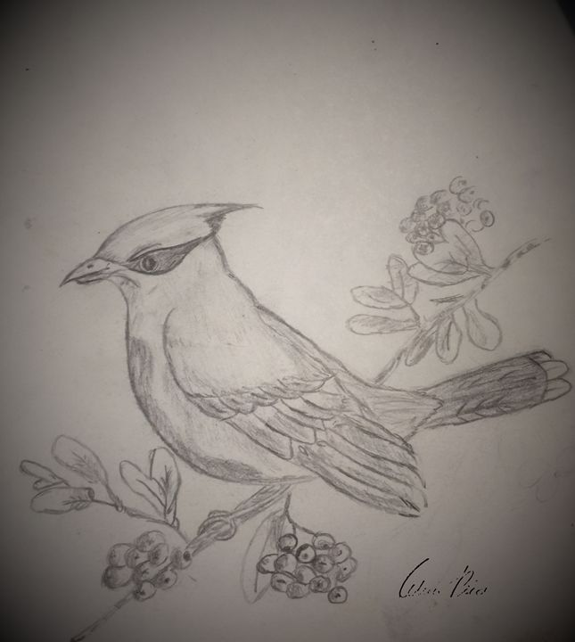 Cardinal - Astylez Images