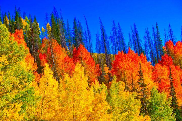 Utah Aspens in Full Autumn Colors - A & B Martin Photography
