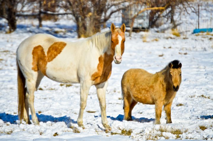 The Horse and his Pony - A & B Martin Photography