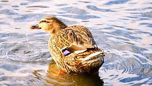 Thirsty Bird - A & B Martin Photography