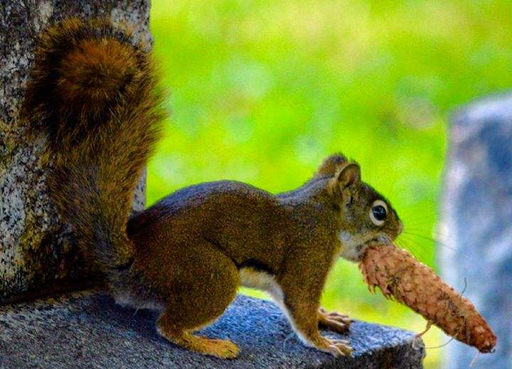 Graveyard Squirrel - A & B Martin Photography