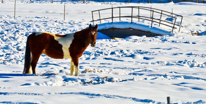 Winter Horse - A & B Martin Photography