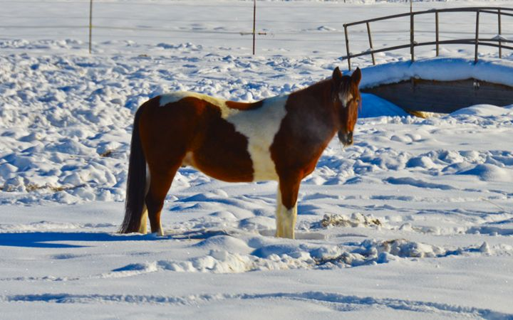 Winter Horse in the Snow - A & B Martin Photography