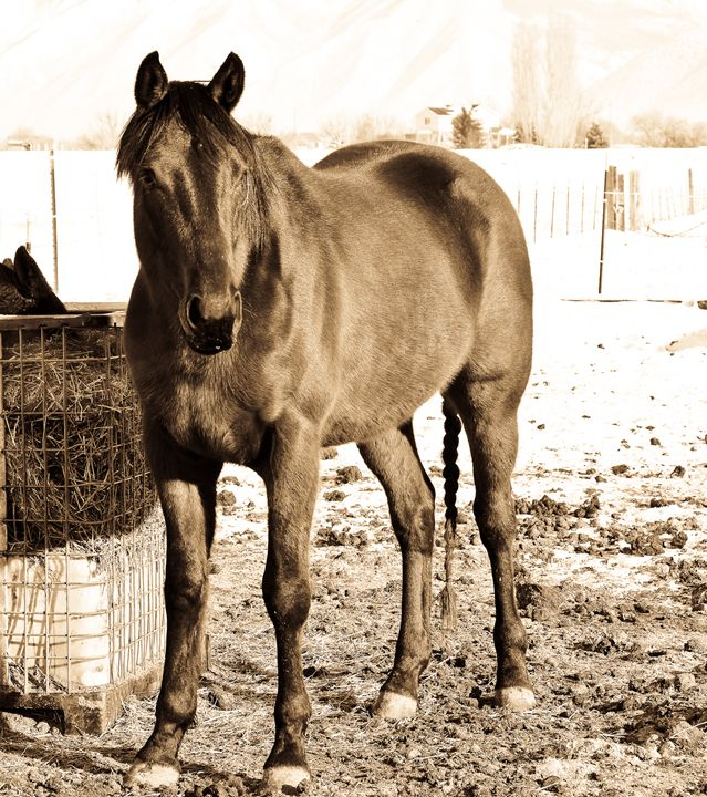 Finnick the Horse - A & B Martin Photography
