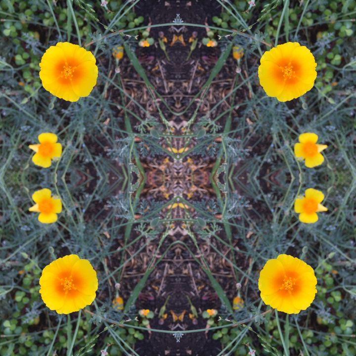 California Poppies - Libbys_ArtStudio