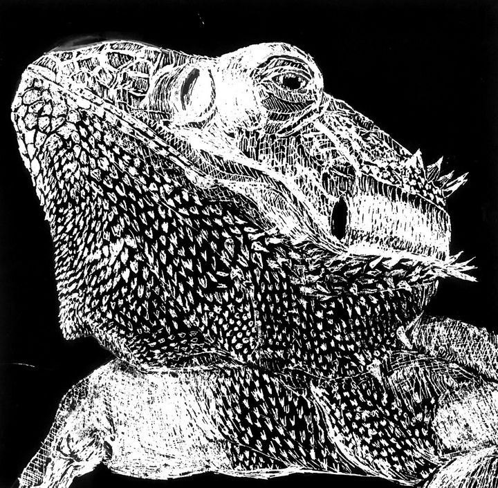 Bearded Dragon - Joey Kovach
