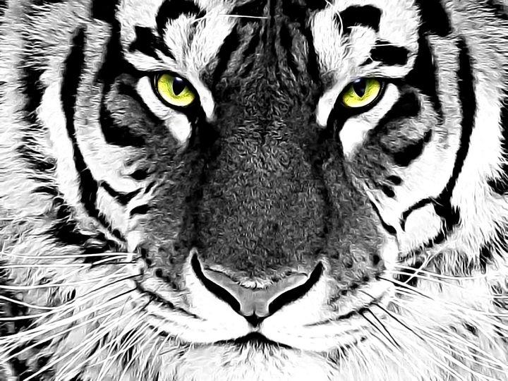White Tiger - DDV Arts Gallery