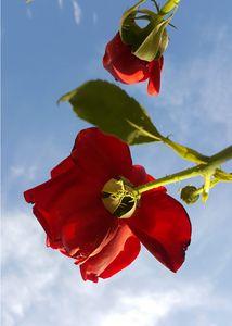Underneath the Poppy