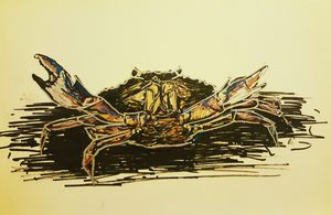 Crab Under Flashlight