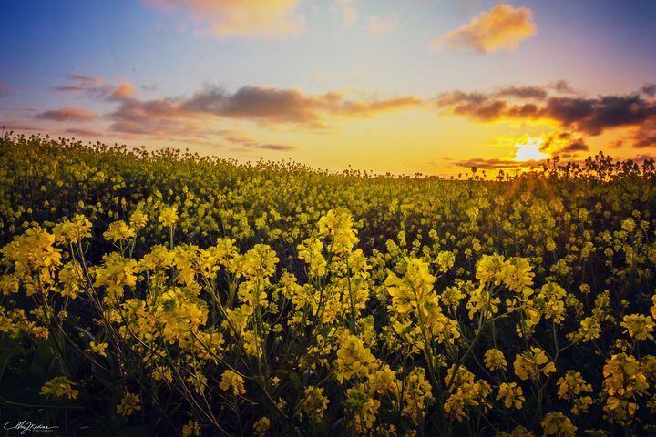 Yellow Flowers - Waves and Wonders - Amy Medina Photography