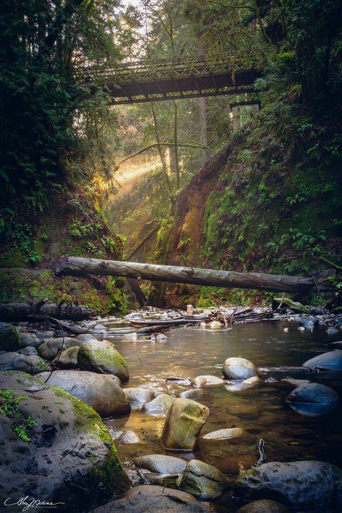 Fairy Lights in Nisene - Waves and Wonders - Amy Medina Photography