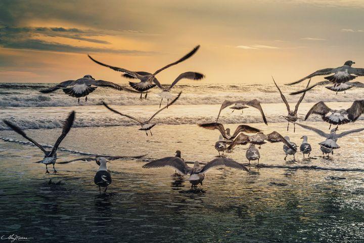 Freedom - Waves and Wonders - Amy Medina Photography