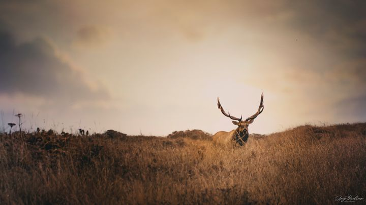In the Rut - Waves and Wonders - Amy Medina Photography