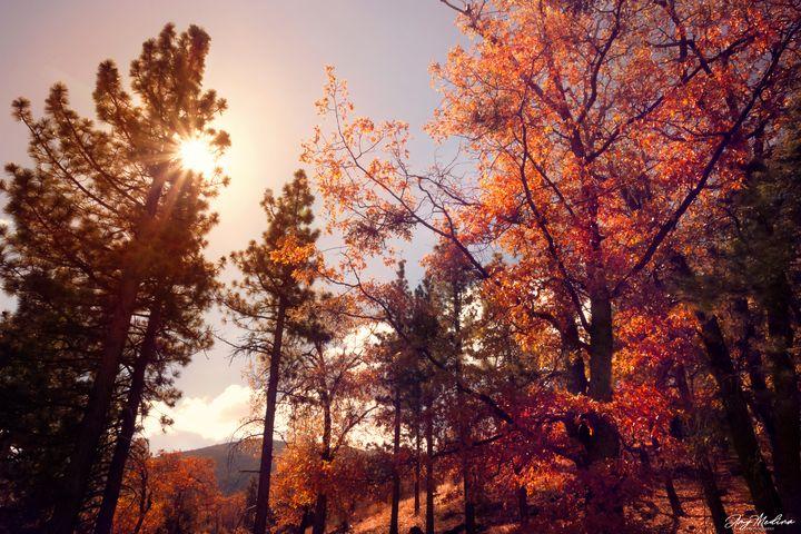 Fall Glow - Waves and Wonders - Amy Medina Photography