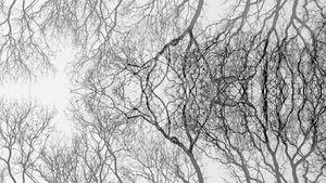 Tree reflection