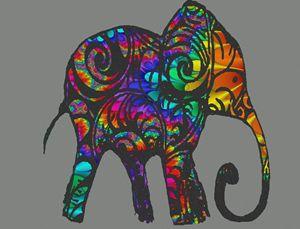rainbow herd