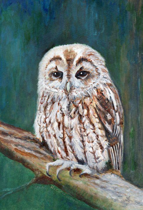 Tawny Owl - Veronica Rickard