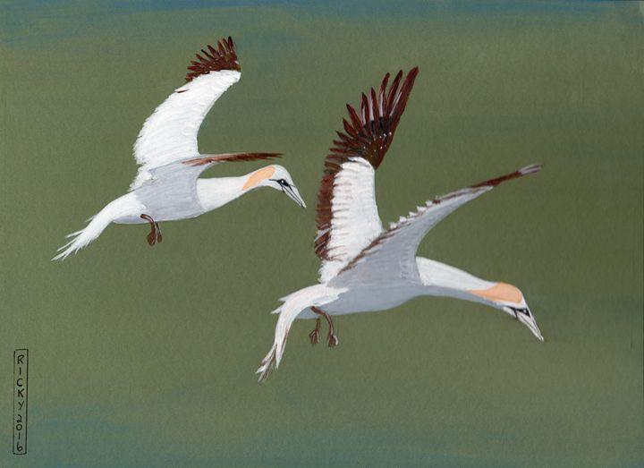 Gannets - Veronica Rickard