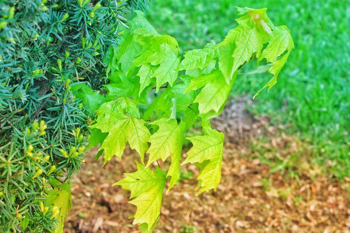 Nature is Green - R. Maxwell Hogan