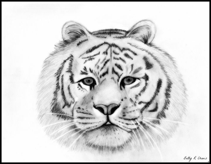 Tiger - Chavis Art