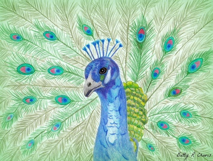 Pretty Peacock - Chavis Art
