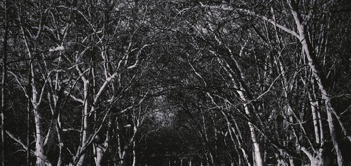 forest - Gojani Anton