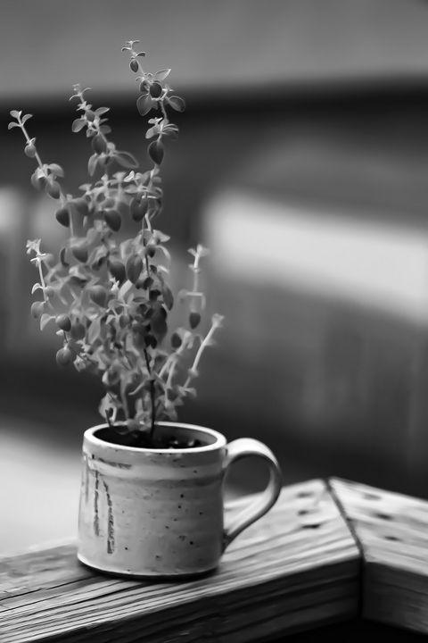 Morning cup of Oregano - Optik DreamZ