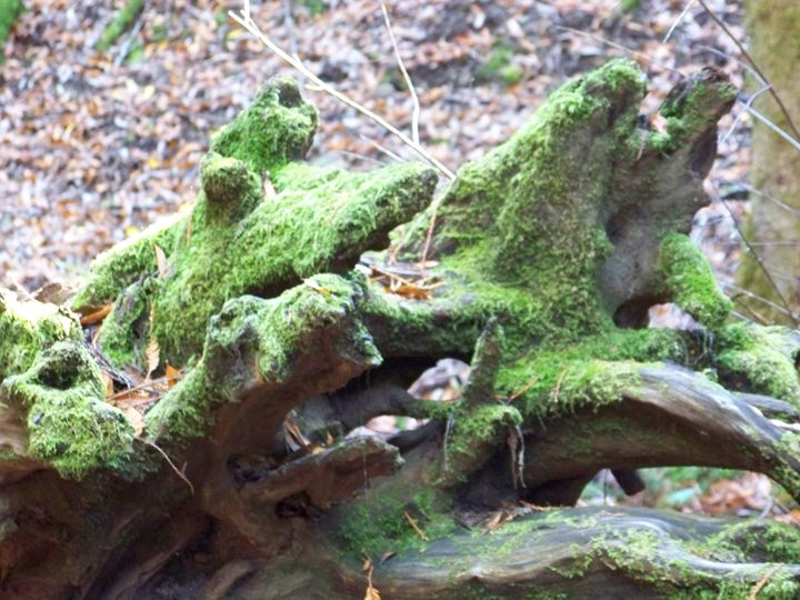 Mossy Log - Stevie-Pieces of Peace