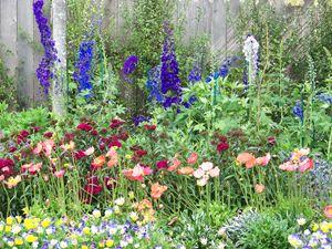 Cambria's Garden