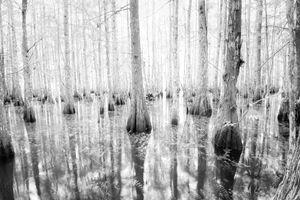 Everglades Infrared