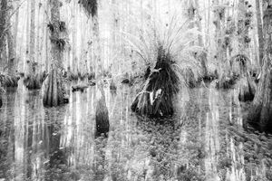 Everglades Infrared #2