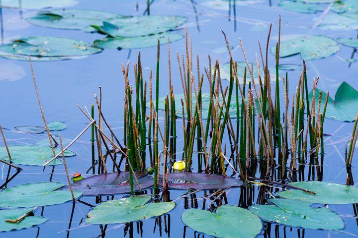 Blue Pond - Pat Sila