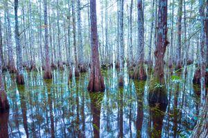 Evergades Forest