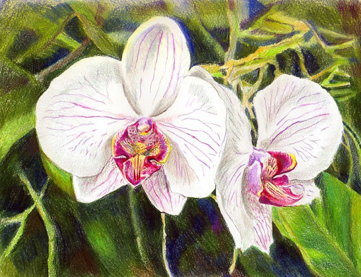 White Orchids - Tatiana Lind