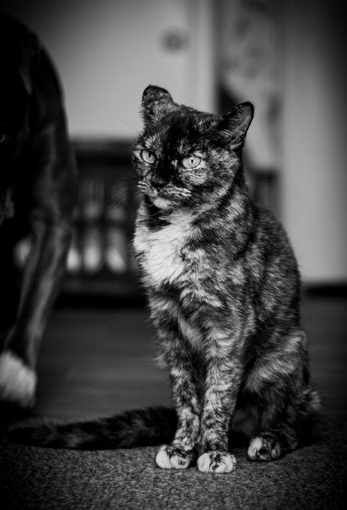 Regal feline - MSDigital