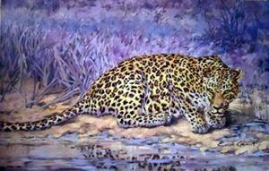 Leopard Contrast