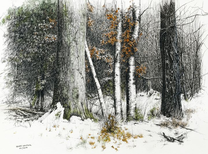 After the Snow - Henry Whittell