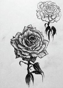 Duo roses