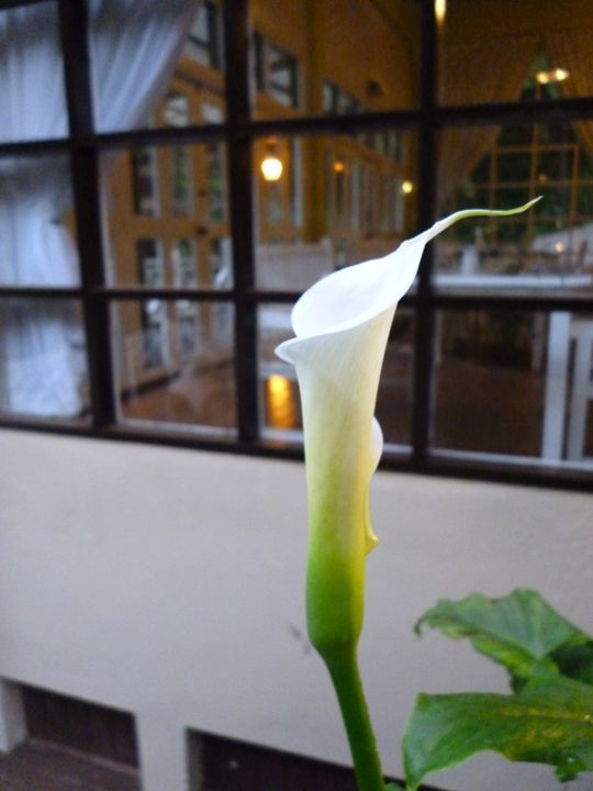 Flower (18) - May