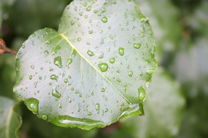 Leaf Drops - M'Lisa Photography