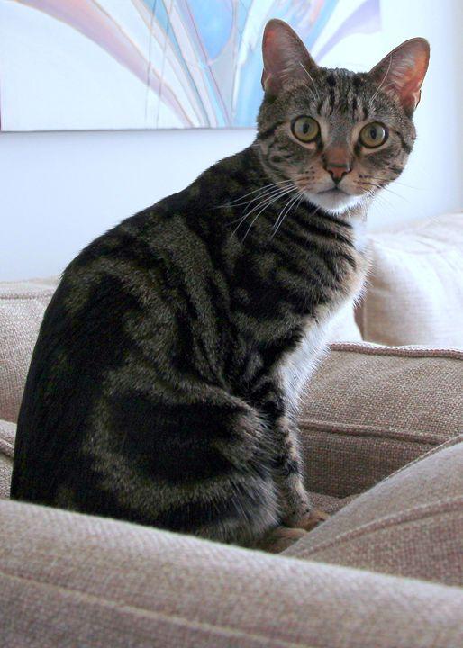 Very beautiful cat - Valentina Averina
