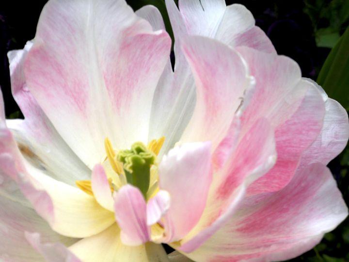 In full bloom - Anivad Art