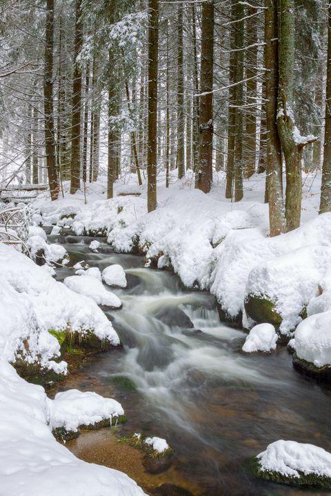 Creek in winter - Dirk R.