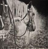Original Horse Art