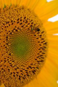 Sunny Bee - Natural Beauty