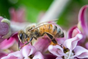 Bee Too - Natural Beauty