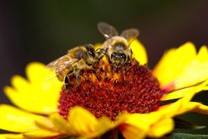 Two Bee or not To Be - Natural Beauty